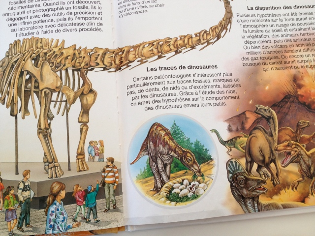 "An image of a dinosaur nest out of ""Les Dinosaures"" by Editions Fleurus"